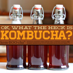 Kombucha Benefits and Side Effects (UPDATED 2017 GUIDE)